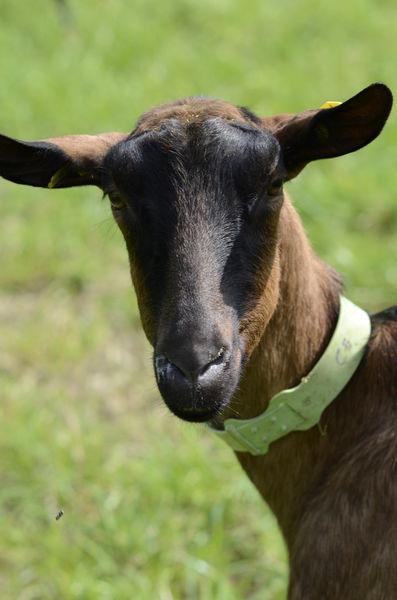 EARL La Chèvrerie de la Cayonnière