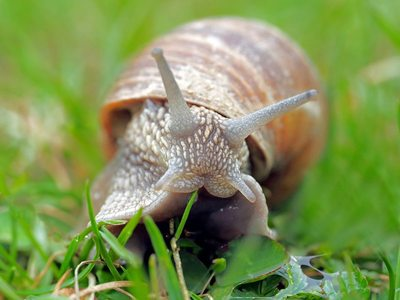 Lescargot de Layat