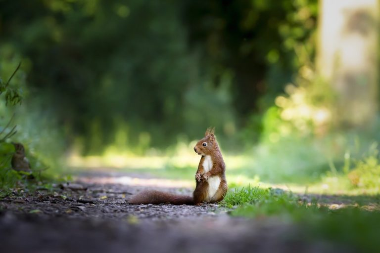 squirrel-4515962_1280